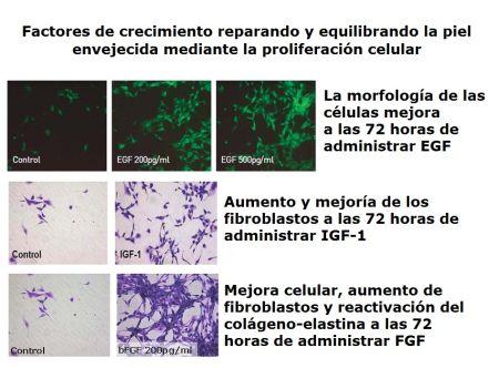 EGF + IGF1 + FGF